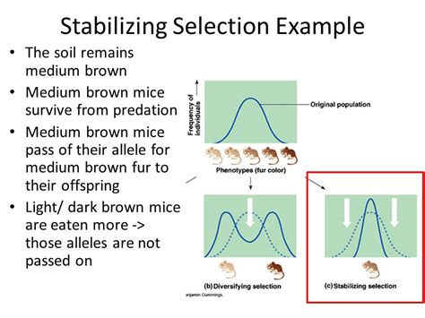types of natural selection ppt video online download