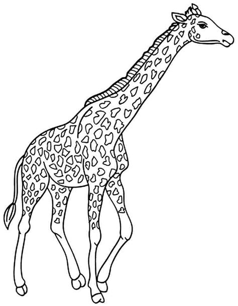 coloring book pages giraffe giraffe coloring page the tallest animal in the world
