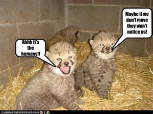 zoo animals funny cheetah photos