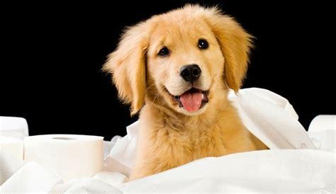 potty puppy apartment behavior archives herepup