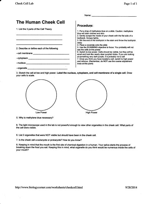Tissue Worksheet Answers by 7 Best Images Of Human Tissue Types Worksheet Worksheets