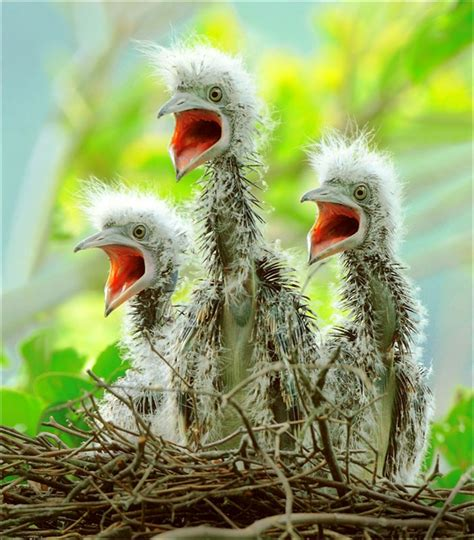 cute baby birds weneedfun