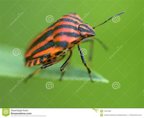 bug xl reguler 1gb bug on green to a leaf stock photo image 14541580