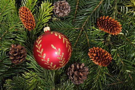 bauble on christmas tree background free stock photo
