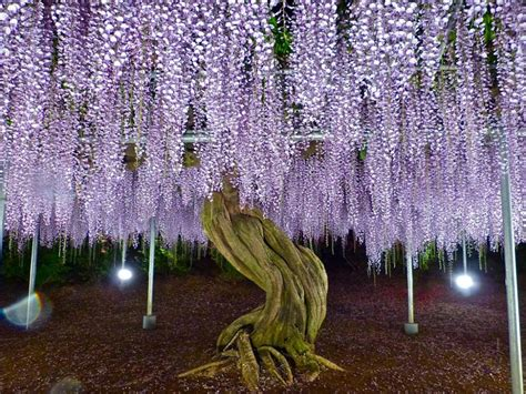 travelling with me ashikaga flower park japan ashikaga flower park in may part 2 tochigi japan