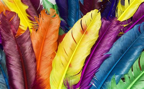 colored feathers multicolored bird feathers desktop wall hd wallpapers rocks
