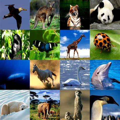 191 que comen los animales vertebrados 191 de que se alimentan educarchile animales segun su cubierta corporal plumas