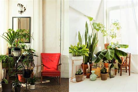 7 Different Way To Indoor Plants Decoration Ideas In | 7 different way to indoor plants decoration ideas in best