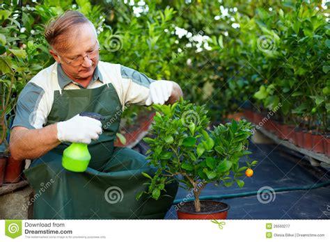 imagenes graciosas de jardineros el hombre jardinero cuida para las plantas en invernadero