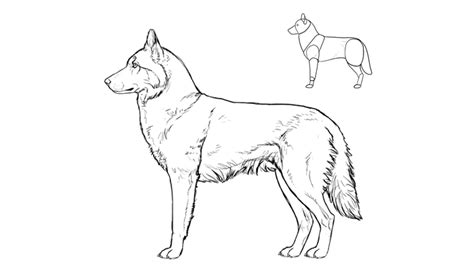 dogs to draw how to draw a details make the difference