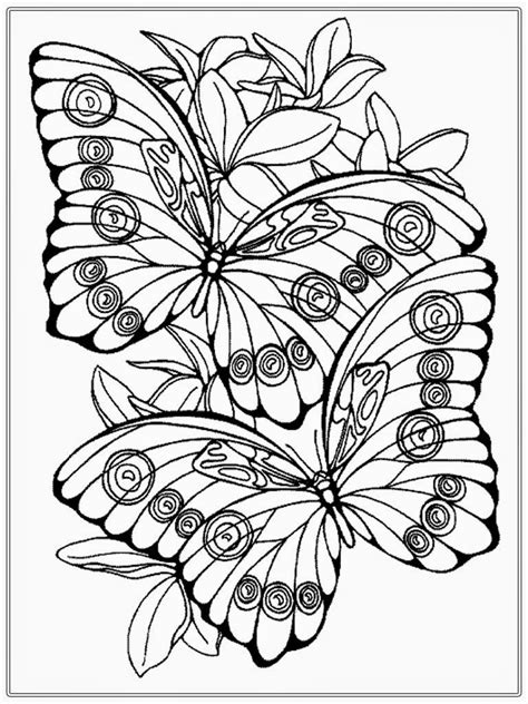 coloring pages for adults butterflies coloring pages adult coloring pages butterfly realistic