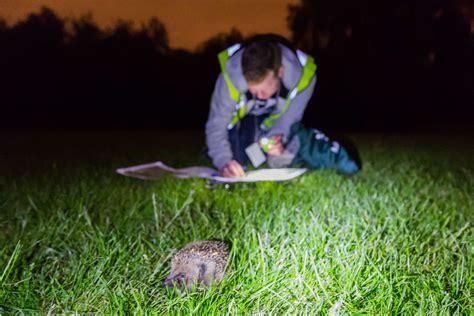 The Secret Hedgehogs Of Regent S Park Kentishtowner