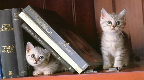 caturday the wilmington bookshelf