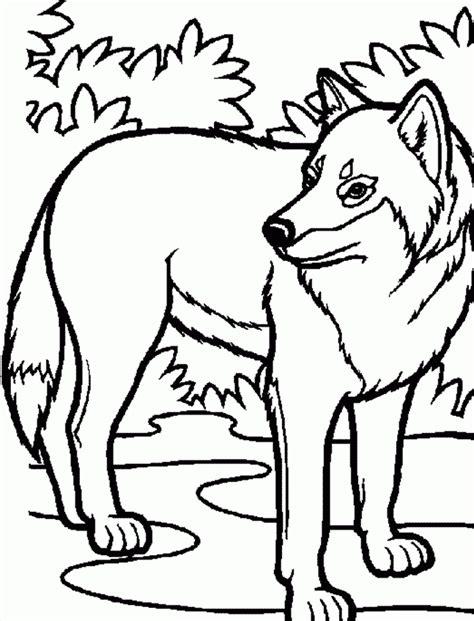 imagenes para dibujar un lobo dibujos de lobos para ni 241 os im 225 genes y fotos