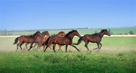 adoption colorado blm horses trained for adoption on colorado sanctuary wide open pets
