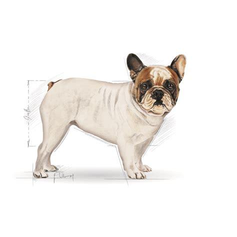 Royal Canin Bulldog Dewasa 3kg royal canin bulldog 3kg sklep karmimypsiaki pl