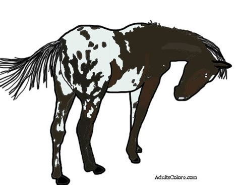 coloring pages of appaloosa horses farm animal coloring pages backyard barnyard updated
