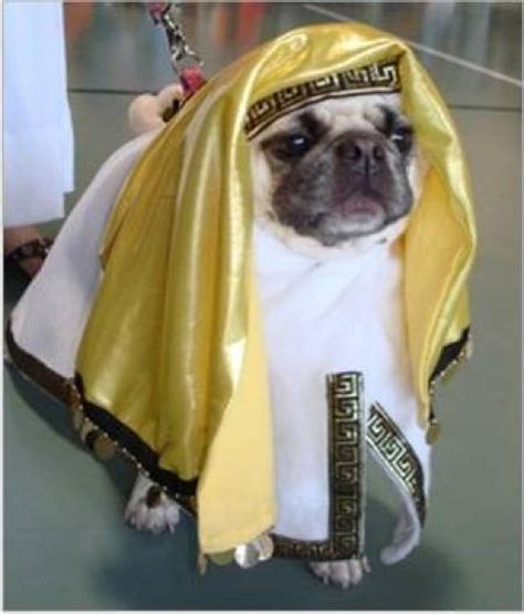 pug runt pug arab runt of the web