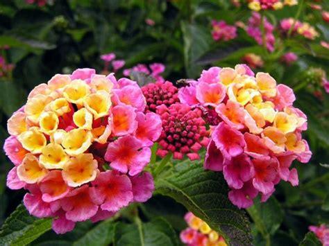 esp 233 cies de plantas que florescem todo o ano flores