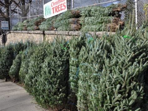 where to buy a christmas tree in queens forest hills ny
