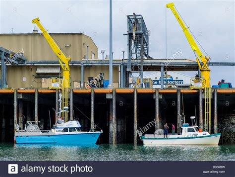 alaska fishing boat processors commercial fishing boats unload their fresh catch of fish