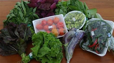 Harga Sayuran Segar by Sayuran Sehat Segar Dan Awet Berkat Biochar Kompos