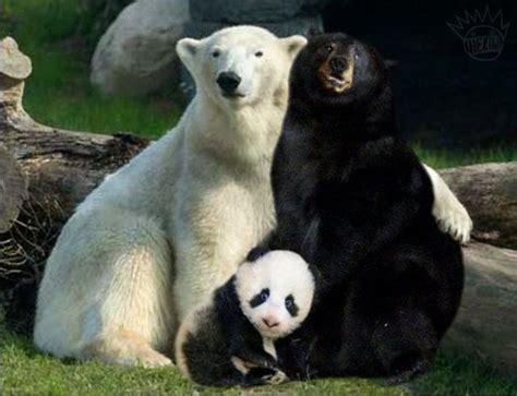 Piyama Anak Panda Putih Hitam kopi hangat foto anak panda lucu