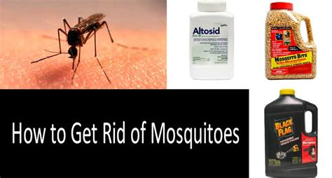 How To Get Rid Of Mosquitoes 7 Tried And True Ways Get Rid Mosquitoes Backyard
