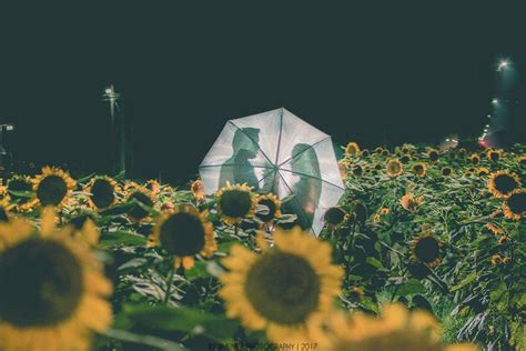 Mba Up Diliman Requirements by 10 Sunflower Photos We At Up Diliman S Graduation Season