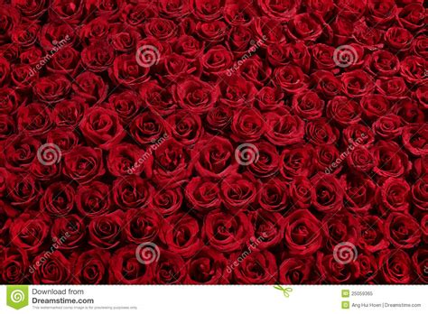 a bed of roses bed of roses royalty free stock photo image 25059365