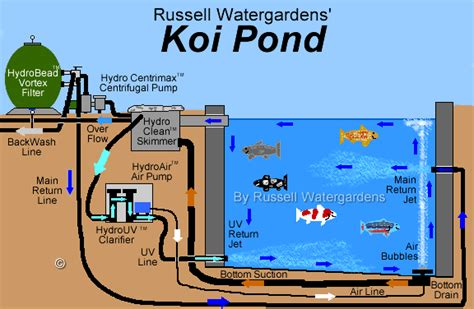 koi pond diagram pond bottom drain diagram related keywords suggestions