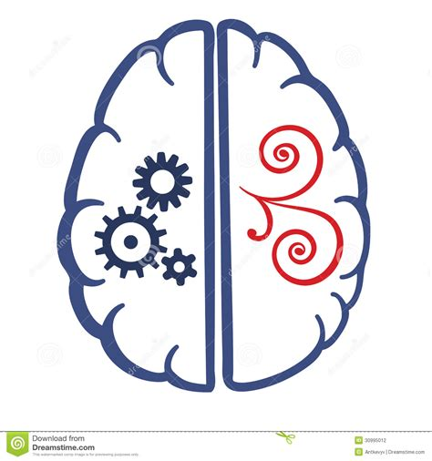 A In Two Parts two parts of human brain stock vector image of system
