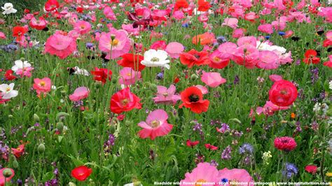 Flowers Uk by Desktop Wallpaper Scenery Backgrounds And Pictures Of