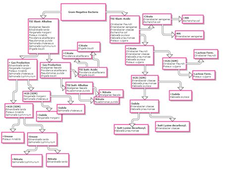 microbiology flowchart unknown bacteria click to image click and drag to move use arrow
