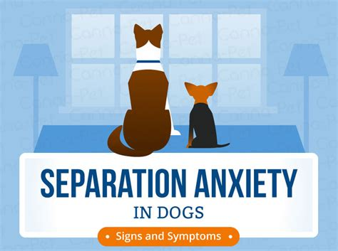 treating separation anxiety in dogs treating separation anxiety in dogs