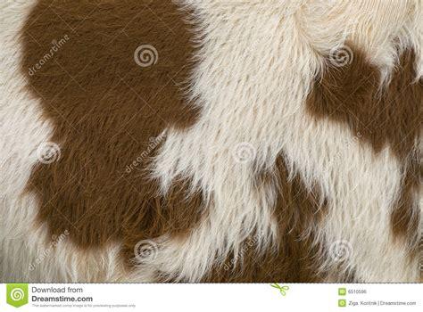 Cow Skin Cow Skin Royalty Free Stock Image Image 6510596