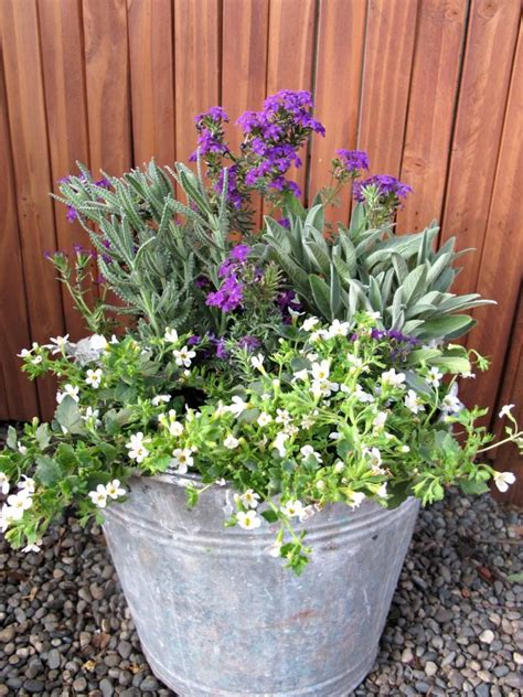 container gardening plant combinations container garden a rescue how to