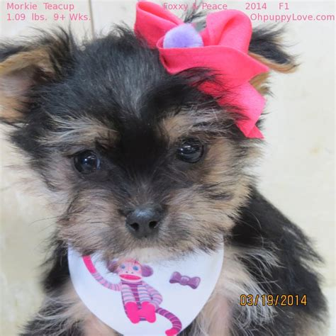 mixed breed puppies for sale michigan tips for house a new puppy shock collars petco dogs for sale in