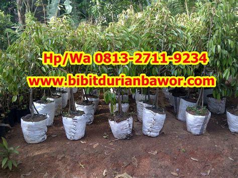 Jual Bibit Durian Musang King Kaki 4 bibit durian musang king archives bibit durian montong