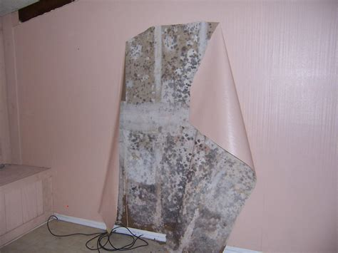 what causes mould on bedroom walls household products to clean mold with dangers of mold
