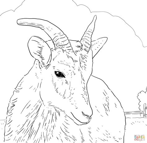 bighorn sheep coloring pages bighorn free colouring pages