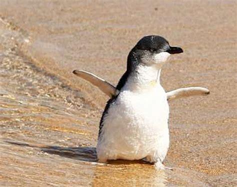 small tiny penguin