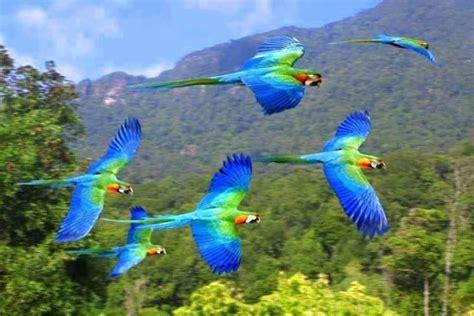rainforest colors parrots flying in the rainforest natures colors