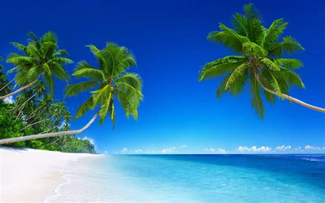 tropical beach paradise  wallpapers hd wallpapers id