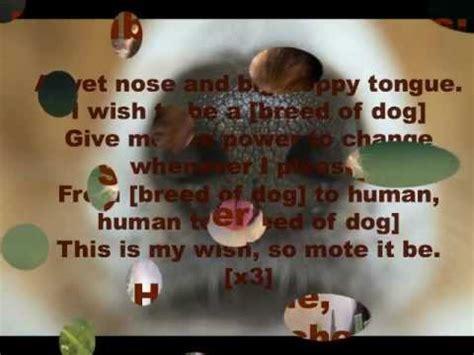 dog spell youtube