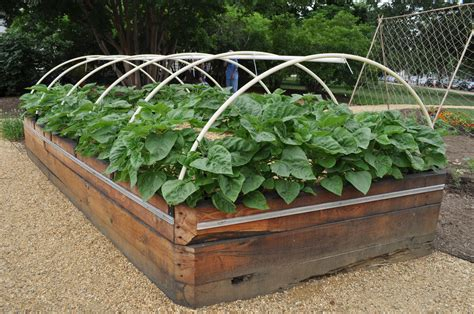 Raised Vegetable Bed by Raised Bed Vegetable Gardening Easier Gardening Ideas