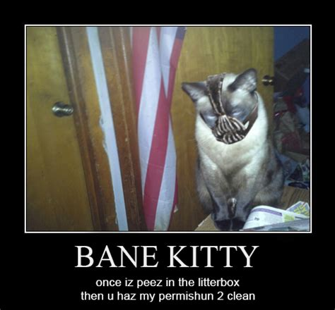 Bane Cat Meme - bane kitty s liter when gotham is ashes you have my permission to die know your meme