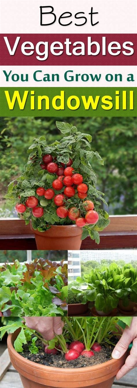 Best Windowsill Vegetables 1000 Images About Diy Gardening Ideas On