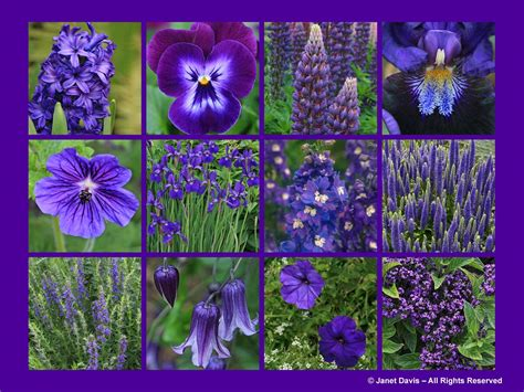 types of purple types of purple and blue flowers www imgkid com the