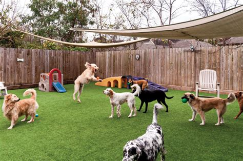 6 Places To Per Your Pet Houstonia